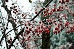 Crystal Berries by Susanna Edwards