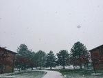 Cedar Winter