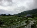 The Tea Terraces