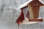 Ohio Snowbird