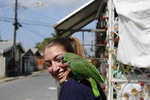 Got a Parrot on Me by Carrie Bergan