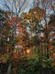 The Fainting Fall Sun by Chloe Jane Dillon