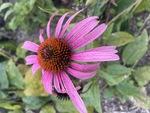 Just a Flower by Kayla Brimner