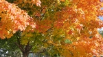Welcome Fall by Kristin Veillon