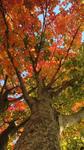 Sea of Leaves by Katelyn J. Kime