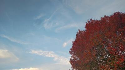 Fall Dream
