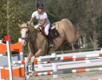 Equestrian by Alicia J. Iaffaldano
